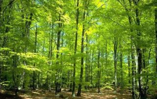 Zielony las latem