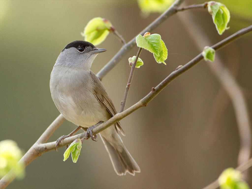 Wiosenny ptak na gałęzi