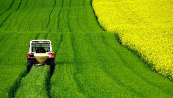 Rolnik w polu. Ciągnik jadącu po zielonych zbożach, obok kwitnie na żółto rzepak.